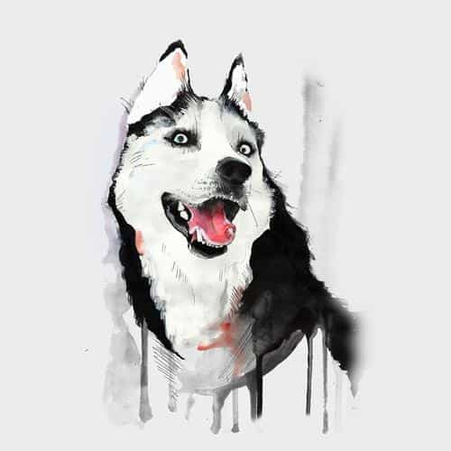happy dog white husky animal illust watercolor