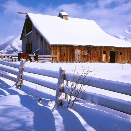 Horse barn in winter