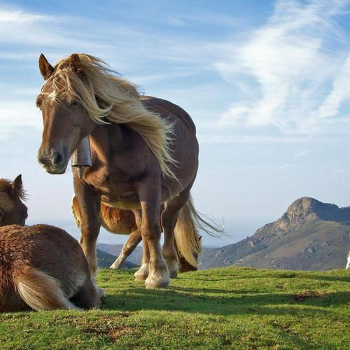 Horses in the wild wallpaper