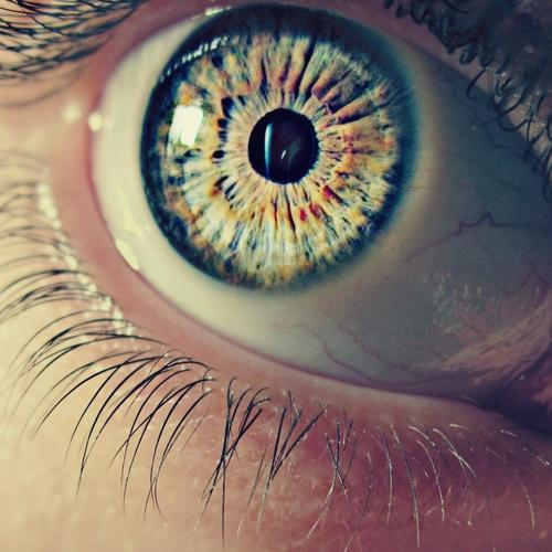 Human eye macro wallpaper