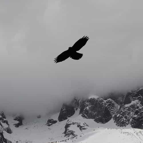 julia revitt eagle mountain winter snow nature animal
