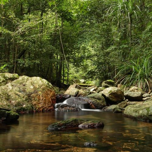 Jungle in Nord-Australien hintergrund