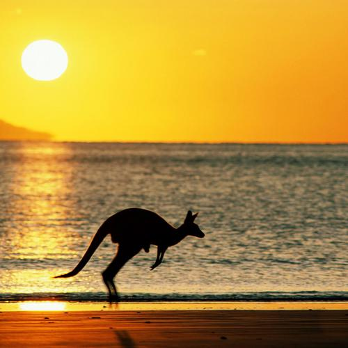 Kangaroo jumping on the beach in sunset wallpaper