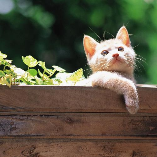 Kitten In A Flower Bed