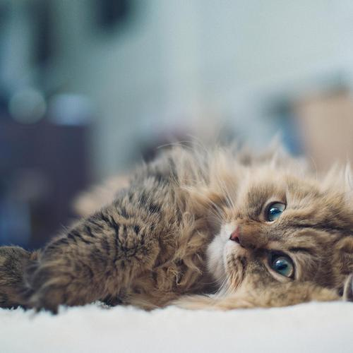 Kitten laying on the bed