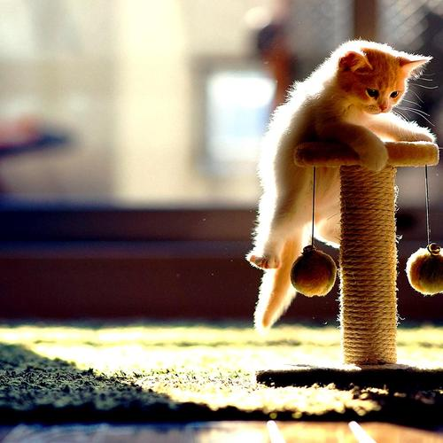 Kitten playing in sunlight