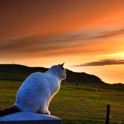 Kitty sitting on the fence in sunset