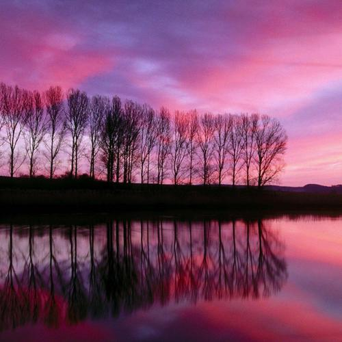 Lake shore in purple sunset reflection