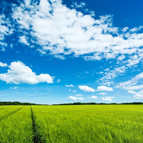Large green field wallpaper