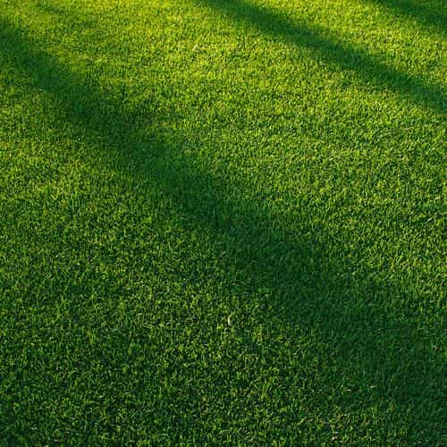 lawn grass sunlight green pattern
