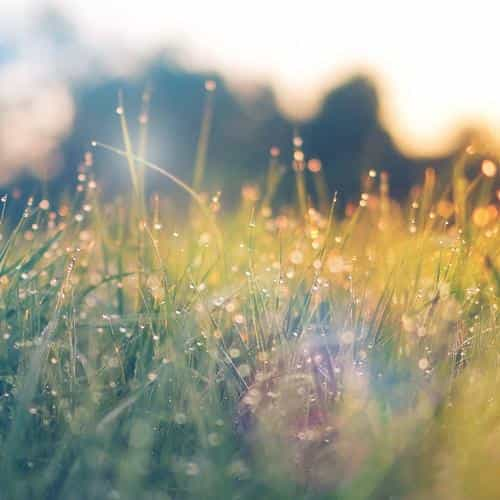 lawn green nature sunset light bokeh spring flare happy