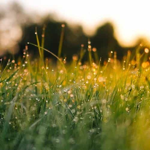 lawn green nature sunset light bokeh spring