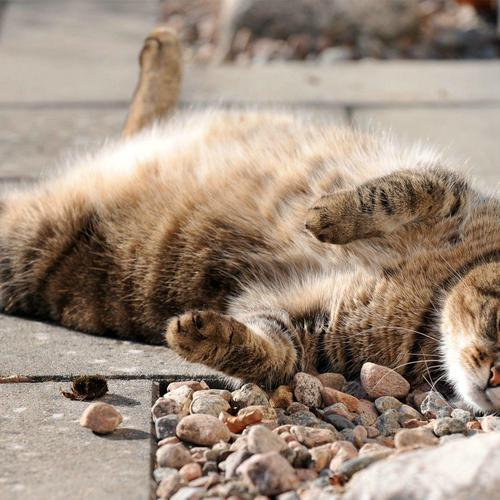 Lazy cat enjoy basking on pavement