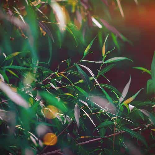 leaf green bokeh summer nature morning flare