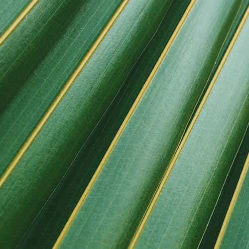 leaf green line nature pattern