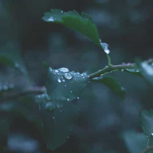 leaf water rain nature green
