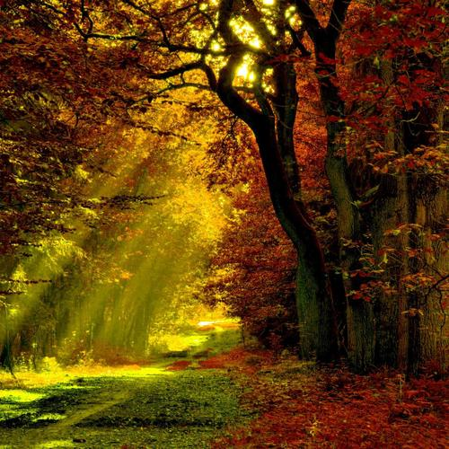 Lighted trail autumn forest wallpaper