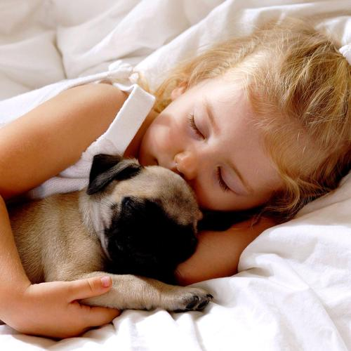 Little baby girl is sleeping while holding pug wallpaper