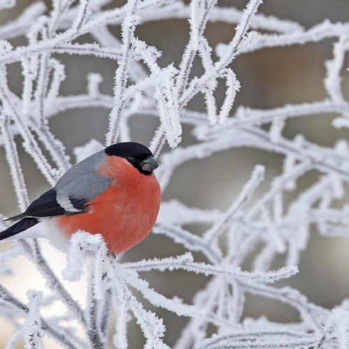 Little bird on frozen tree