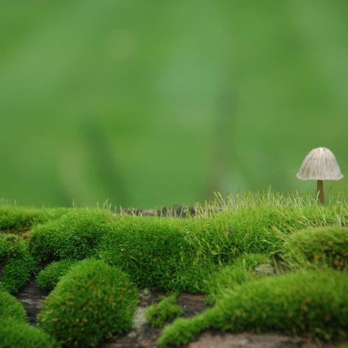 Little Fungus wallpaper