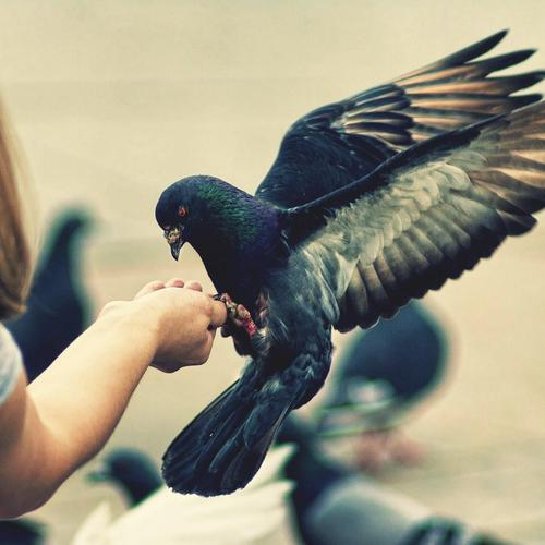 Little girl feeding bird wallpaper