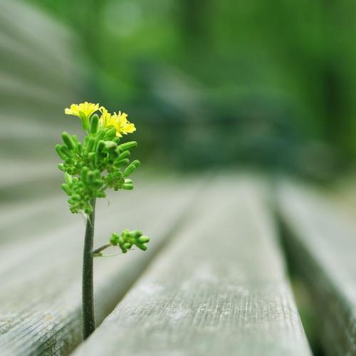 Little plant growing on the bench wallpaper
