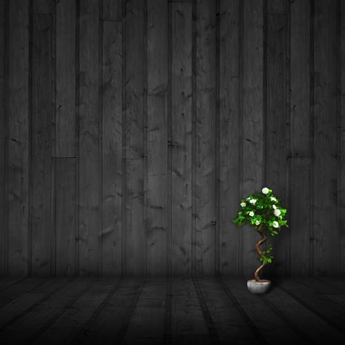 Little tree growing in dark room wallpaper