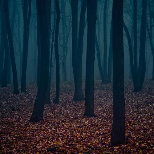 Lonely Dark Forest HD wallpaper