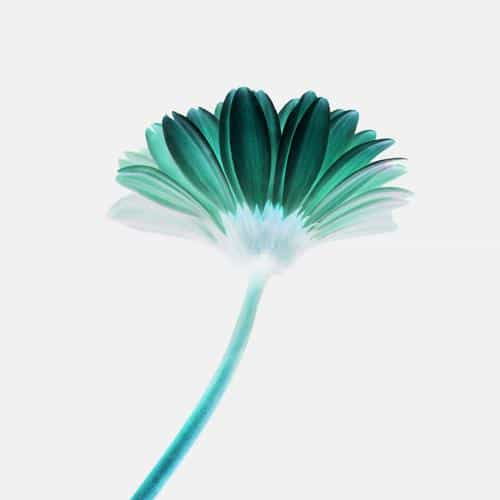 lonely flower white green simple minimal nature