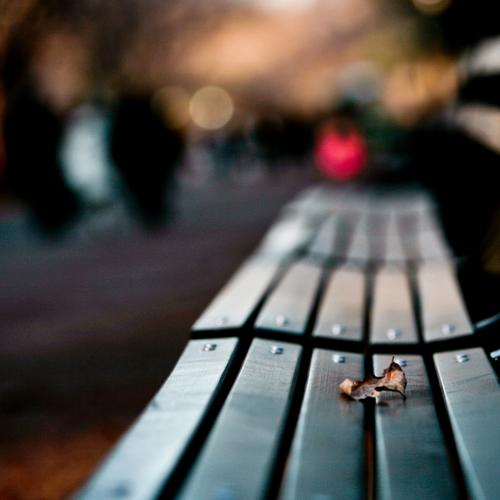 Lonely leaf on lonely bench