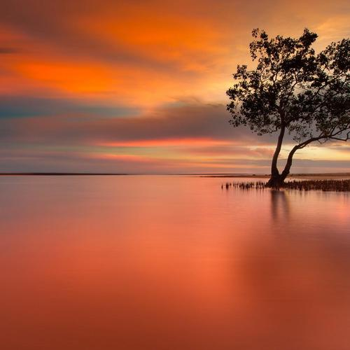 Lonely tree in peaceful sunset wallpaper