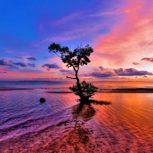 Lonely tree standing in the purple sunset wallpaper