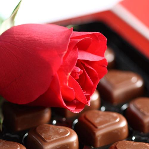 Lovely chocolate and rose for Valentine day