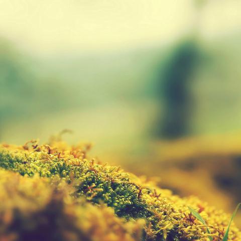 lovely moss flower nature
