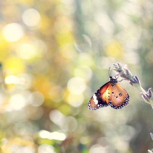 Macro beautiful butterfly wallpaper