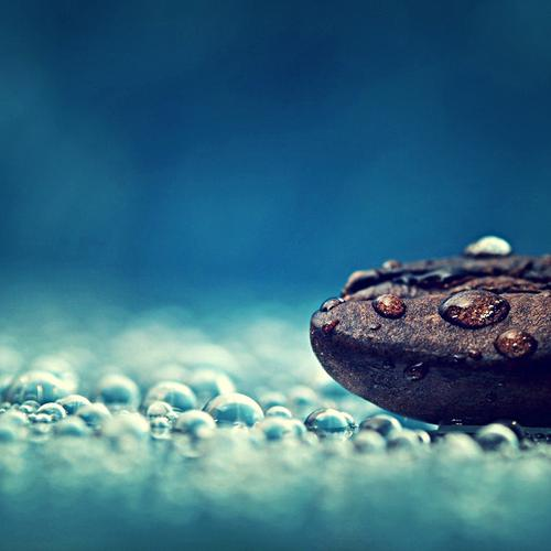 Macro of coffee bean wallpaper