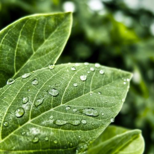 Macro of green leaf with dew drops wallpaper