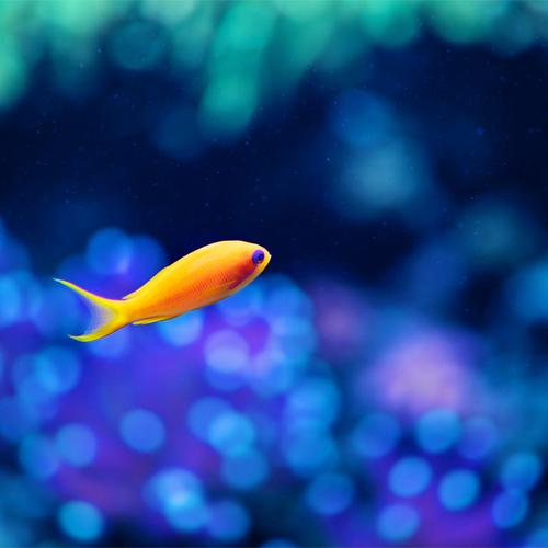 Macro small yellow fish in Aquarium wallpaper