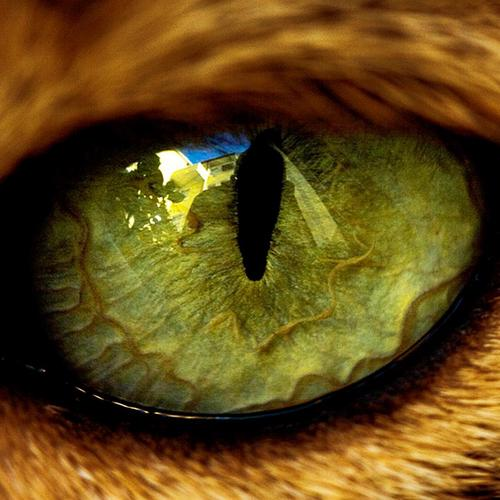 Magnificent cat eye close up wallpaper
