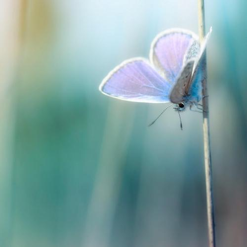 Magnificent macro butterfly wallpaper