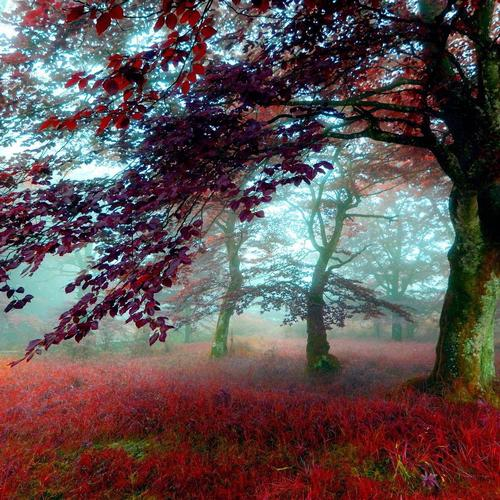 Magnificent red leaves autumn forest