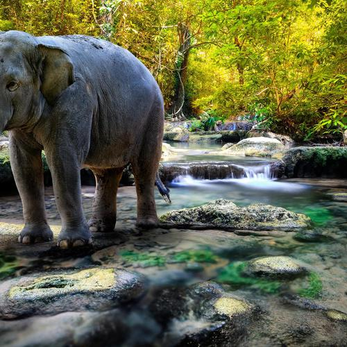 Majestic elephant in the stream