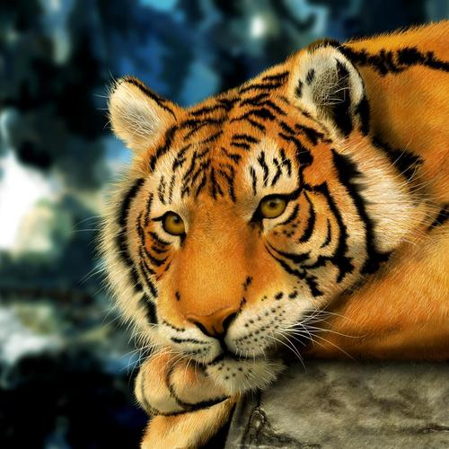 Majestic tiger look in macro shot