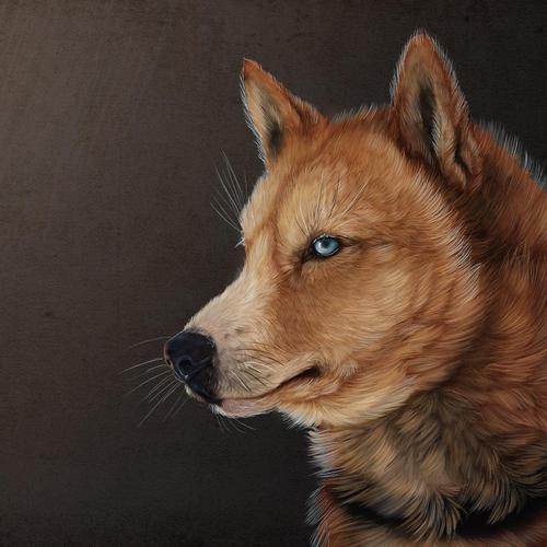 Majestic wolf painting