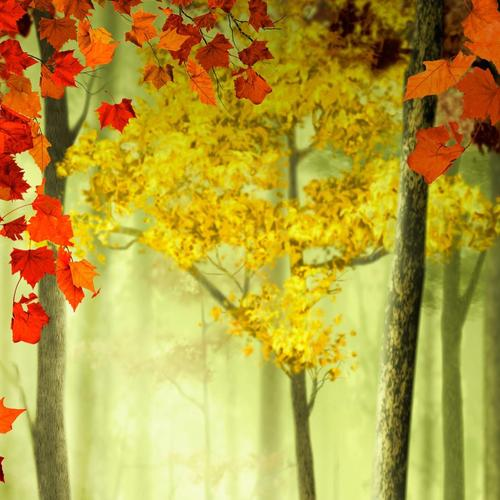 Maple tree in autumn forest wallpaper