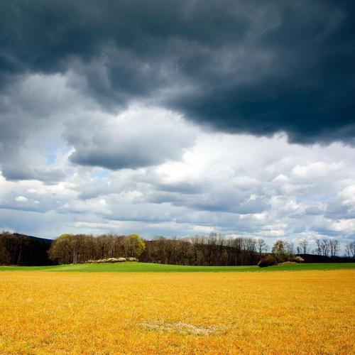 Mean skies over golden field