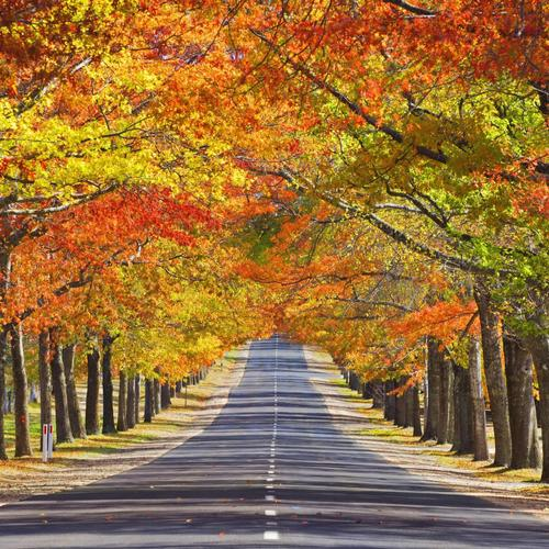 Memorial avenue in autumn wallpaper