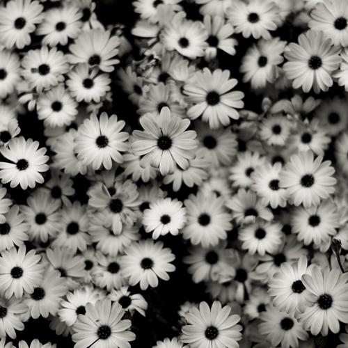 Monochrome flowers wallpaper