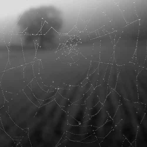 morning dew spider web rain water nature bw dark