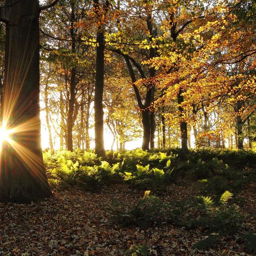 Morning sun in fall forest wallpaper